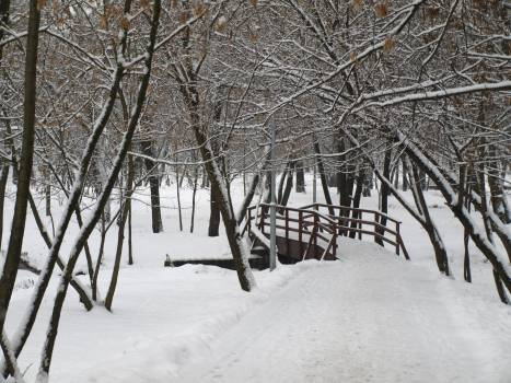 Snow Weather Winter Free Photo