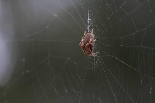 Spider web Web Spider Free Photo