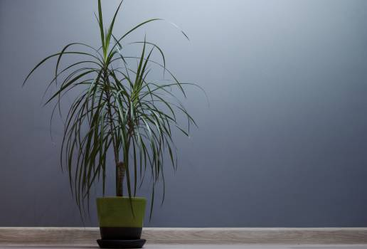 plant decor  Free Photo