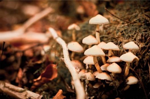 mushrooms fungi nature  #20772