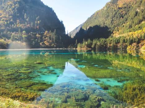lake water trees  #20781