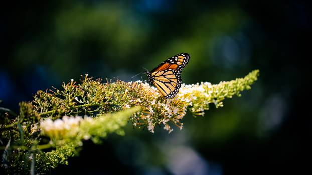 plant butterfly  #20807