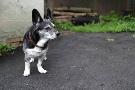 Dog Canine Domestic animal #208080