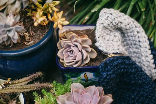 plants pots gardening  Free Photo