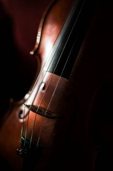 Bass Stringed instrument Bowed stringed instrument Free Photo