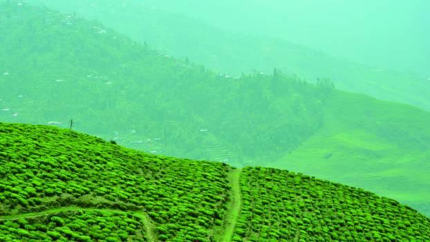 Agriculture Rural Landscape #208540