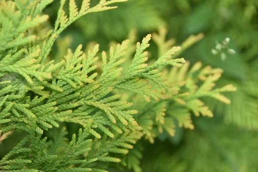 Leaf Plant Fern Free Photo