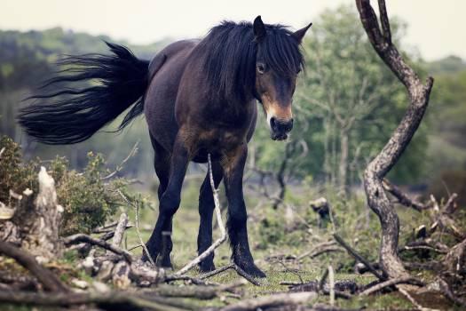 horse mane tail  #20878