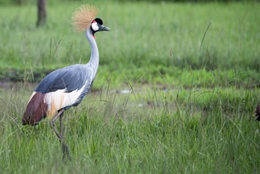 Crane Wading bird Aquatic bird #209125