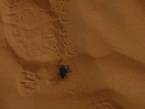Tick Acarine Arachnid #209389