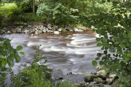 Forest Land River Free Photo