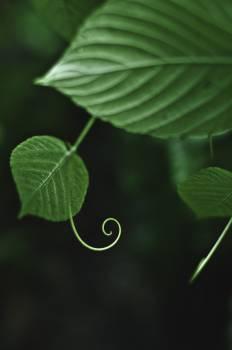 Drop Leaf Plant #209621
