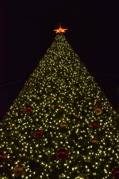 Decoration Tree Holiday Free Photo