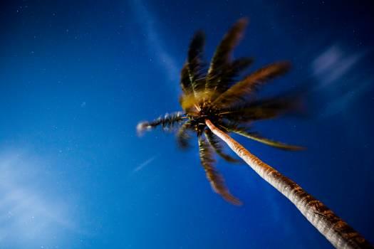 Lionfish Fly Scorpaenid Free Photo