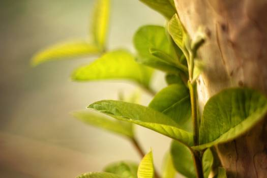 Plant Leaf Growth Free Photo