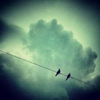 birds animals sky  #21001