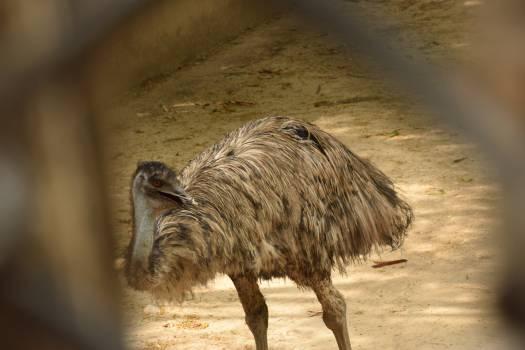Swine Warthog Ungulate #210170