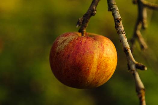 Fruit Apple Edible fruit Free Photo