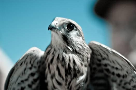 bird wings animal  #21050