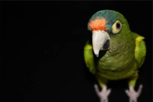 green parrot bird  #21109