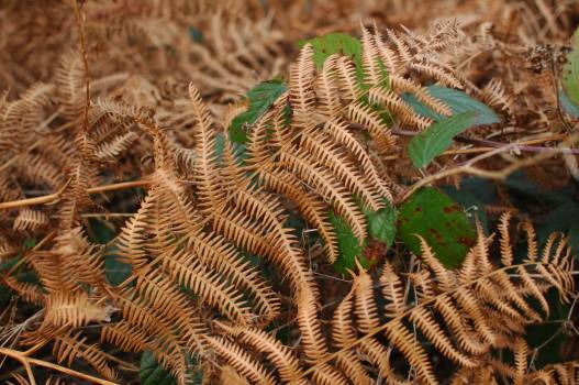 Fern Plant Leaf Free Photo
