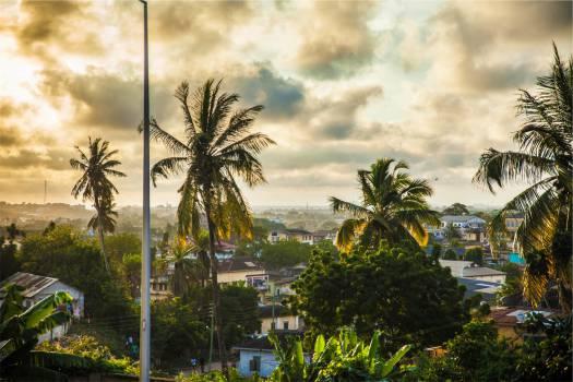 palm trees tropical houses  Free Photo