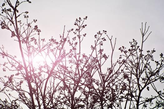 sky grey sun  #21164