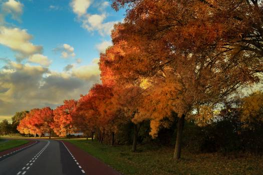 autumn fall trees  Free Photo