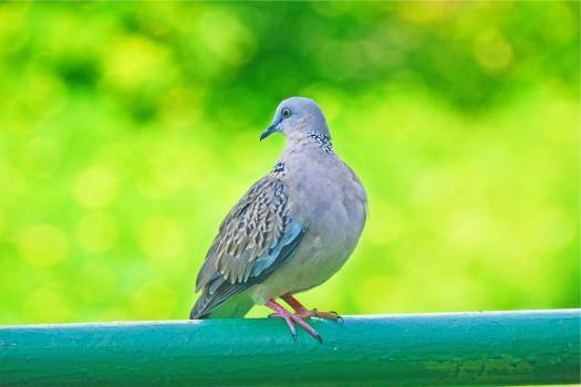 bird animal  #21183