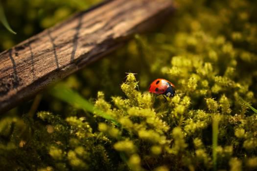 ladybug ladybird insect  #21194