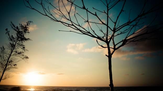 Sun Tree Star #212536