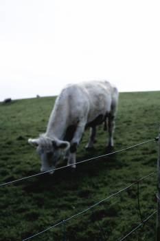 Grass Field Farm #213085