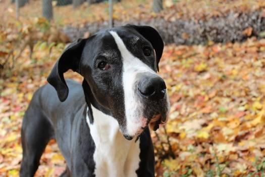 Dog Canine Domestic animal Free Photo