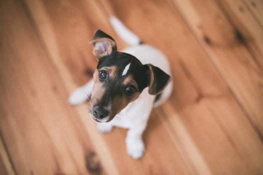 Dog Canine Pet #213785