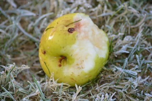 Edible fruit Fruit Quince #213986
