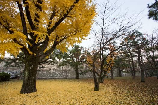 autumn fall trees  #21424