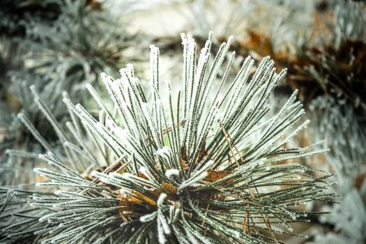 Sea urchin Echinoderm Invertebrate #214289