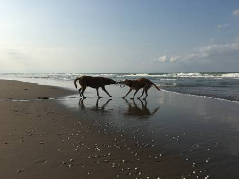 Horse Camel Horses Free Photo