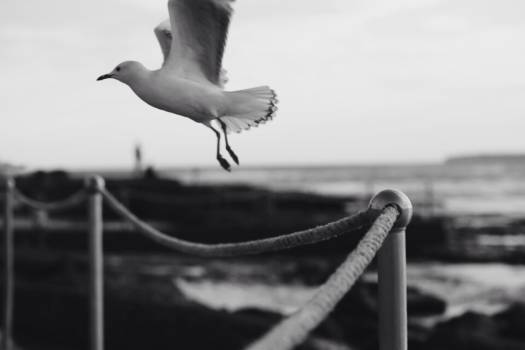bird wings flying  Free Photo