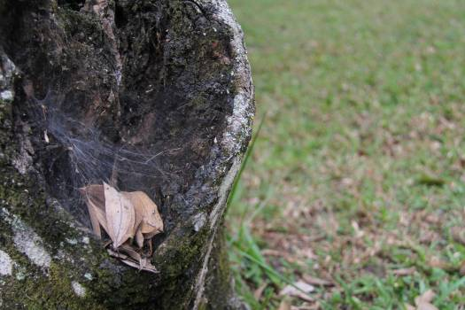 Tree Landscape Hole #215435