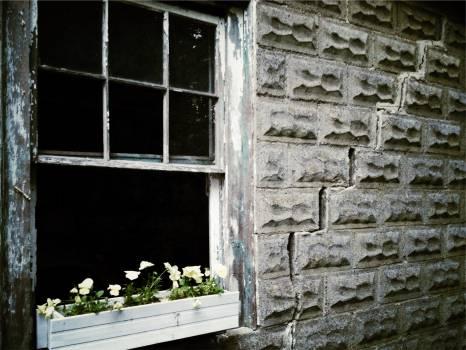 window sill flowers  #21560