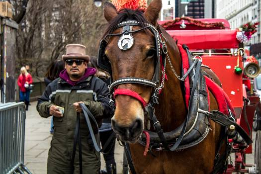 Harness Horse Carriage Free Photo