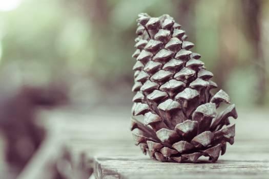 Cone Pineapple Plant Free Photo