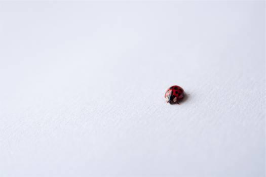 ladybug ladybird insect  #21688