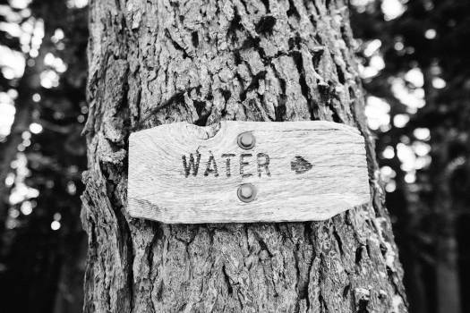 tree trunk sign water  #21693
