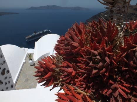 Sea urchin Echinoderm Invertebrate Free Photo