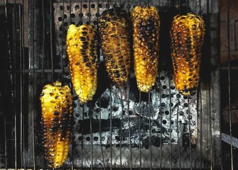 Kernel Corn Grain Free Photo
