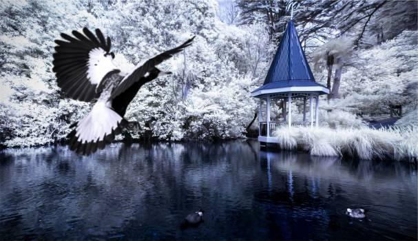 gazebo birds lake  Free Photo