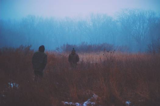 dark fog winter  #21758