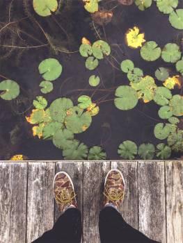 shoes laces dock  Free Photo
